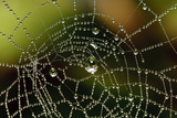 Dew Covered Spider Web Photographic Print by Matt Freedman