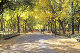 The Mall, Central Park, Manhattan, New York, USA Photographic Print by Peter Bennett