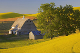 Canola and Barn, Palouse, Washington, USA Photographic Print by Charles Gurche