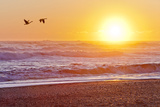 Canada Geese over Rialto Beach at Sunset, Olympic NP, Washington, USA Photographic Print by  Jaynes Gallery