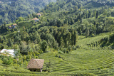 Tea Fields in Rize, Black Sea Region of Turkey Photographic Print by Ali Kabas