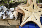 Souvenir Starfish and Seashells for Sale, Livingston, Guatemala Photographic Print by Cindy Miller Hopkins
