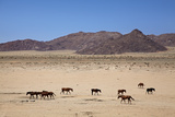 Wild Horses, Garub, Namib-Naukluft National Park, Near Aus, Namibia Photographic Print by David Wall