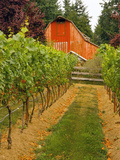 Red Barn at a Winery and Vineyard on Whidbey Island, Washington, USA Photographic Print by Richard Duval