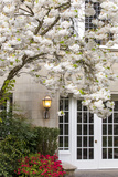 Cherry Tree in Full Bloom, Pitcock Mansion, Portland, Oregon, USA Photographic Print by Chuck Haney