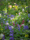Summer Wildflowers in Mt Rainier National Park, Washington Photographic Print by Jerry Ginsberg
