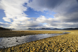 Stony Intertidal Zone, Isla Fitz Roy, Aysen, Chile Photographic Print by Fredrik Norrsell