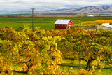 Autumn in Walla Walla Wine Country, Walla Walla, Washington, USA Lámina fotográfica por Richard Duval