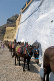 Donkeys Wait to Take Tourists to the Harbor at Fira, Santorini, Greece Photographic Print by David Noyes