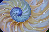 Close-Up of Chambered Nautilus Cut in Half, Oregon, USA Photographic Print by  Jaynes Gallery