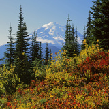 Mt Rainier Above Autumn Huckleberry, Chinook Pass, Washington, USA Photographic Print by Charles Gurche