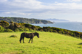 Horse Along the Coast of Chiloe, Region Los Lagos, Chile Photographic Print by Fredrik Norrsell