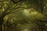 Oak Trees with Spanish Moss, Savannah, Georgia, USA Photographic Print by Joanne Wells