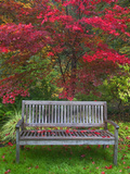 Garden Bench and Japanese Maple Tree, Steamboat Inn, Oregon, USA Photographic Print by  Jaynes Gallery