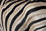 Burchell's Zebra Stripes, Etosha Namibia Photographic Print by Kymri Wilt