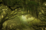 Oak Trees with Spanish Moss, Savannah, Georgia, USA Photographic Print by Joanne Wells
