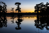 Lake Martin at Sunset with Bald Cypress Sihouette, Louisiana, USA Photographic Print by Alison Jones