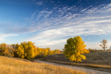 Ash Trees in Autumn Color at Arrowwood NWR, North Dakota, USA Photographic Print by Chuck Haney