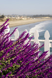 Coastal View with Flowers and Fence, Pismo Beach, California, USA Fotografie-Druck von Cindy Miller Hopkins