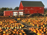 Red Barn and Pumpkin Display in Willamette Valley, Oregon, USA Photographic Print by  Jaynes Gallery