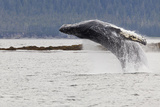 Humpback Whale Lunges Out of Water, Frederick Sound, Alaska, USA Photographic Print by  Jaynes Gallery
