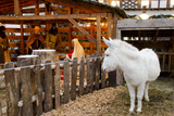 Live Christmas Nativity Manger Display, Obernai, Alsace, France Photographic Print by Cindy Miller Hopkins