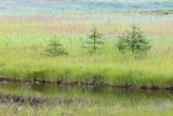 Stream Running Through Meadow, Admiralty Island, Alaska, USA Photographic Print by  Jaynes Gallery