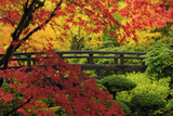 Moon Bridge in Autumn, Portland Japanese Garden, Portland, Oregon, USA Photographic Print by Michel Hersen
