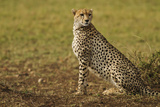 Cheetah on Look Out, Maasai Mara Wildlife Reserve, Kenya Photographic Print by Jagdeep Rajput