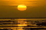 Sunrise Glowing over Sea Ice, Beaufort Sea, ANWR, Alaska, USA Photographic Print by Steve Kazlowski