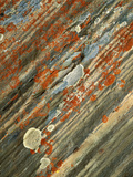 Lichens on Stone, Banff NP, Alberta, Canada Photographic Print by Charles Gurche