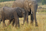 Elephant and Young, Maasai Mara Wildlife Reserve, Kenya Photographic Print by Jagdeep Rajput