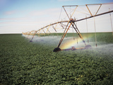 Sprinkler System in Field Photographic Print by Stuart Westmorland