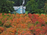 Blueberry Farm in Autumn Colors, Clackamas County, Oregon, USA Photographic Print by  Jaynes Gallery