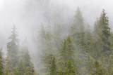 Fog in Spruce and Hemlock Forest Near Martin Creek, Alaska, USA Photographic Print by  Jaynes Gallery