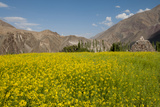 Mustard Flowers and Mountains in Alchi, Ladakh, India Photographic Print by Ellen Clark