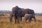 Elephant Family in Savannah, Maasai Mara Wildlife Reserve, Kenya Photographic Print by Jagdeep Rajput