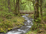 Wooden Bridge over Gorton Creek, Columbia River Gorge, Oregon, USA Photographic Print by  Jaynes Gallery