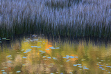 Fall Reflections in a Marsh, Acadia National Park, Maine, USA Photographic Print by Joanne Wells