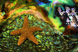 Abstract of Starfish on Shell, Savannah, Georgia, USA Photographic Print by Joanne Wells