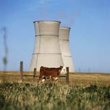 Cow Grazing on Field, Cooling Towers in Background Photographic Print by Dave Bartruff