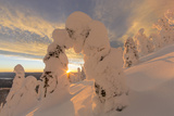 Snow Ghosts in the Whitefish Range, Montana, USA Photographic Print by Chuck Haney