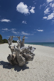 Town Beach Driftwood, Ghisonaccia, Costa Derena, Corsica, France Photographic Print by Walter Bibikow