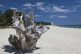 Town Beach Driftwood, Ghisonaccia, Costa Derena, Corsica, France Photographic Print by Walter Bibikow