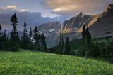 Hanging Gardens, Logan Pass, Glacier National Park, Montana, USA Photographic Print by Charles Gurche