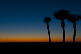 Orange and Blue Sunset on Crescent Beach, Sarasota, Florida, USA Photographic Print by Bernard Friel