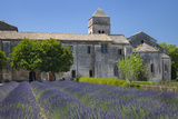 Lavender Below Saint Paul De-Mausole, Saint Remy-De-Provence, France Photographic Print by Brian Jannsen