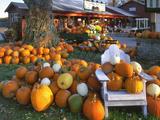 Autumn Display of Pumpkins New England, Maine, USA Fotografie-Druck von  Jaynes Gallery