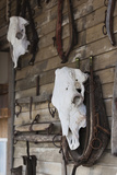 Old Cow Skulls, Fort Hays, Rapid City, South Dakota, USA Photographic Print by Walter Bibikow