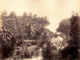 Priestman's River, Jamaica, 1891 Photographic Print by J. Johnson